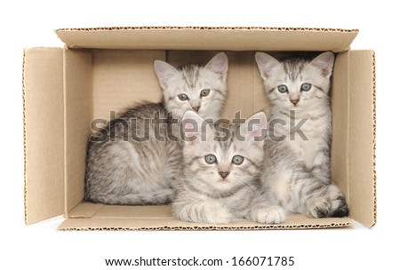 Three small kittens in a cardboard box - stock photo