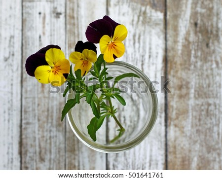 Three small pansy flowers in a jar, shot from above, on distressed white wood background.
