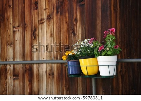 Three small pots of flowers hanging on balcony against old wooden wall - stock photo