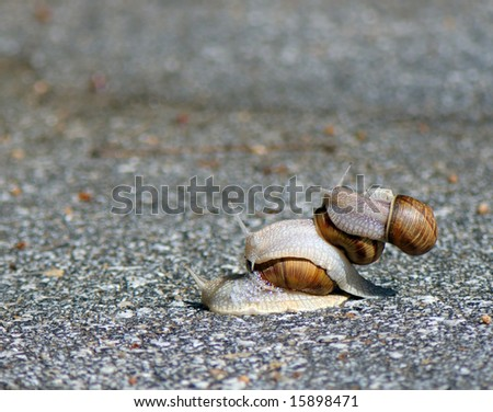 three snails one rides other drives on