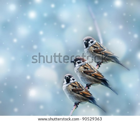 three sparrows birds