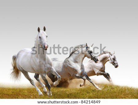 three stallions - stock photo