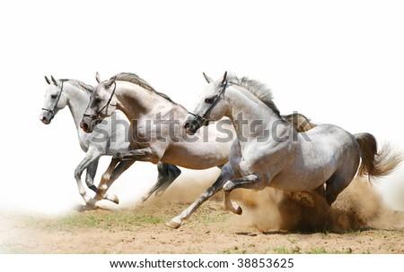 three stallions in dust - stock photo