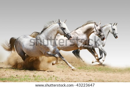 three stallions in dust - stock photo