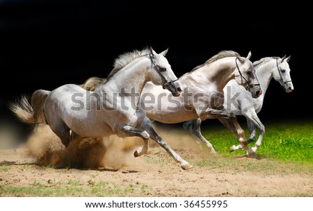 three stallions on black galloping in dust