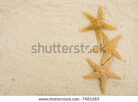 Three starfish on sand with copy space