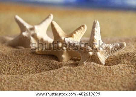 Three starfishes on summer beach - stock photo