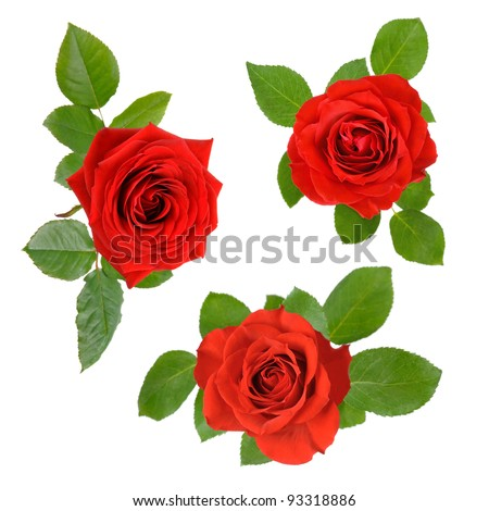 Three studio isolated beautiful red roses with leaves in a set - stock photo