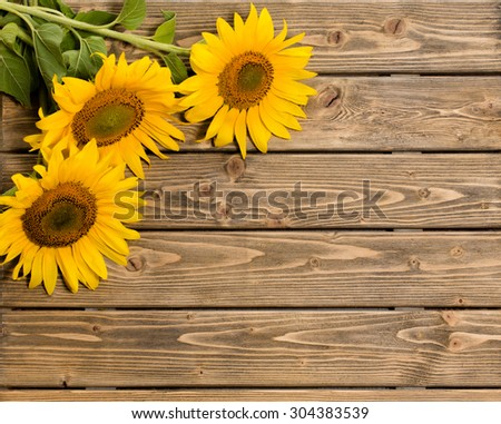 Three sunflowers are on the wooden background. These flowers are represented at left top corner. The space may be used for your ideas. - stock photo