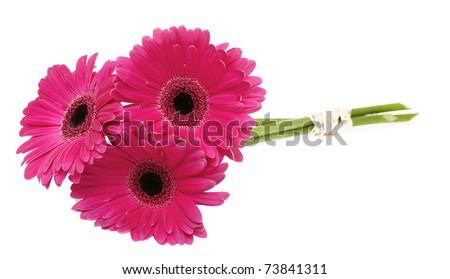 three tied gerberas - stock photo