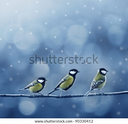 three titmouse birds in winter time - stock photo