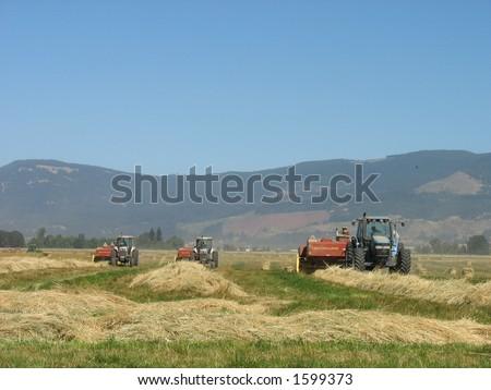 Three tractors bailing - stock photo