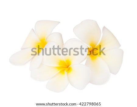 Three tropical flowers  (Plumeria)  isolated on white. Focus on the center of the middle of the flower - stock photo