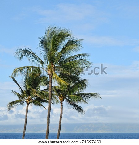 Three tropical palm trees against the background of a blue sky and ocean beach sea waters on the horizon with copyspace. - stock photo