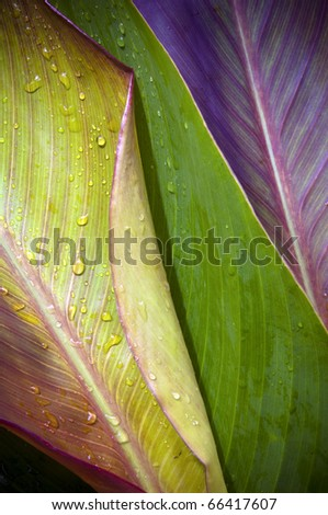 Three very differently colored leaves overlap with water droplets on top - stock photo