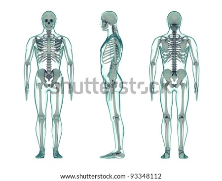 three view render of the human body with transparent skin. - stock photo