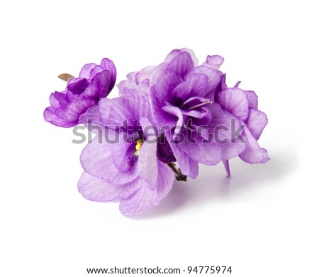 Three violets over white background - stock photo