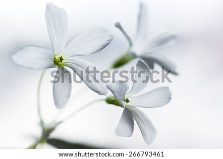 Three white flowers - stock photo