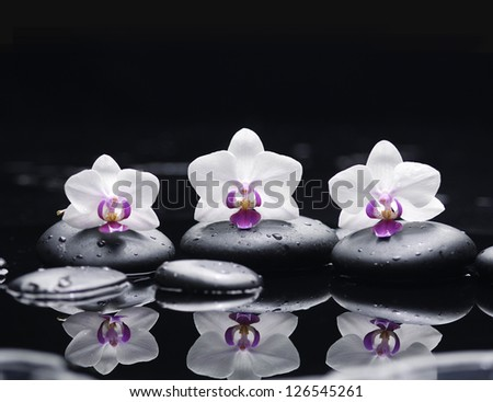 Three white orchid flower and stones in water drops - stock photo