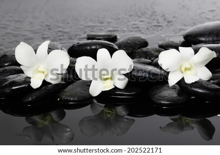 three white orchid on wet stones �wet background