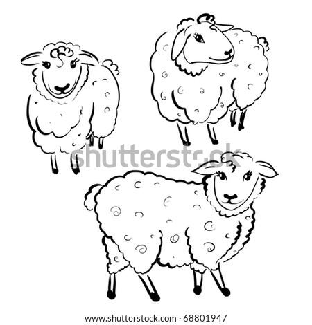 three white sheep on white background - stock photo