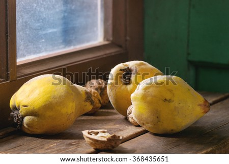 Three whole juicy quinces and walnuts over wooden table near window with bright sunlight. Dark rustic style.  - stock photo