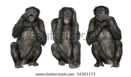Three Wise Monkeys : Chimpanzee - Simia troglodytes (20 years old) in front of a white background - stock photo