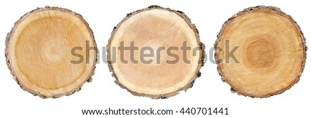 three wood slice cross section with tree rings that show age organic background isolated tree stump circle circles circular natural tree plant history  - stock photo