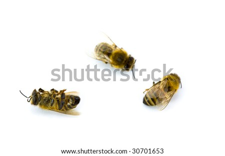 Three Yellow and Black Bees Isolated on White Background - stock photo