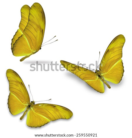 Three yellow butterfly isolated on white background - stock photo