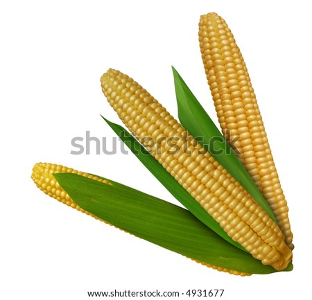 Three yellow indian corns isolated on white background