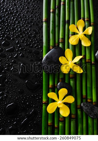 three yellow orchid and bamboo grove on wet black background  - stock photo