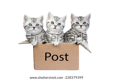 Three young cats in cardboard box with word Post isolated on white background - stock photo