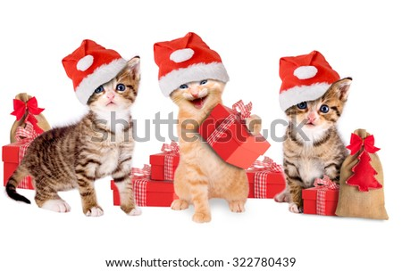 three young kitten with Christmas hats and gifts - stock photo