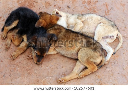 Three young street dogs huddling together and sleeping - stock photo