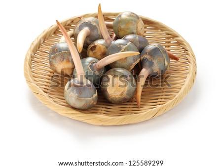 threeleaf arrowhead, kuwai, japanese vegetable - stock photo
