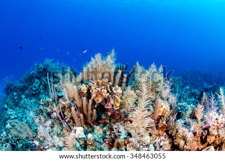 Thriving tropical coral reef - stock photo
