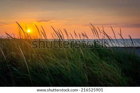 Through the Grasses - stock photo