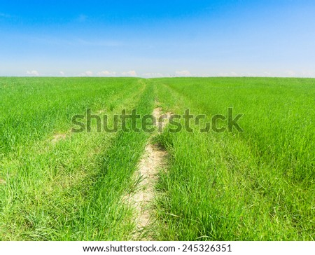 Through the Green On a Country Lane  - stock photo