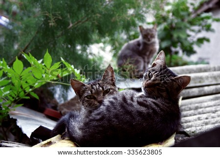 Thrre cute domestic short hair cats snuggle with one another in a window - stock photo