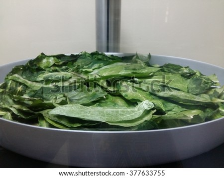 Thubergia laurifolia leaves were dried by freeze dryer for experiment