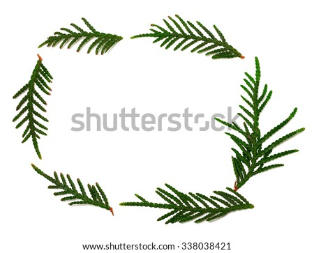 Thuja branchs isolated on white background with copy space - stock photo