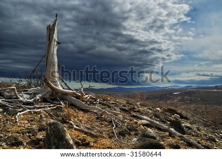 Thundercloud above a dead forest - stock photo
