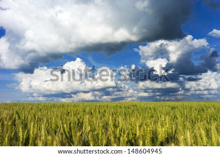 Thunderstorm clouds above a wheat field - stock photo