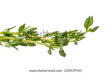 Thyme branch isolated on white background - stock photo