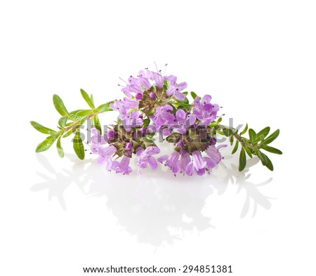 Thyme flowers and leaves close-up on a white background. - stock photo