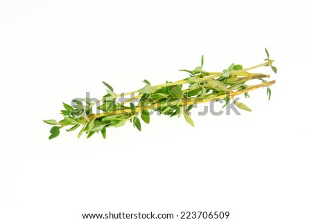 Thyme herb isolated on white background  - stock photo