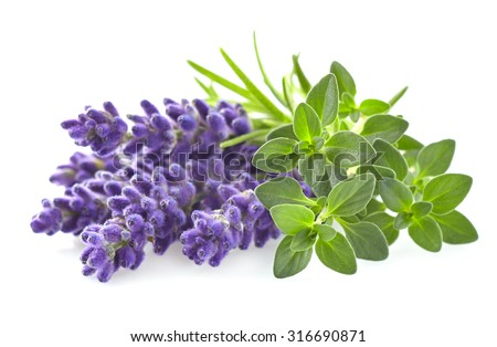 Thyme with lavender - stock photo