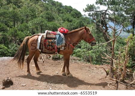 Tibetan horse in nature - stock photo