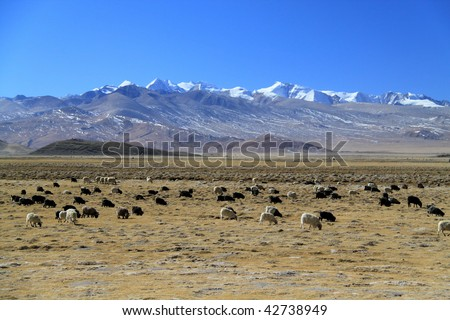 Tibetan landscape with yaks and goats - stock photo